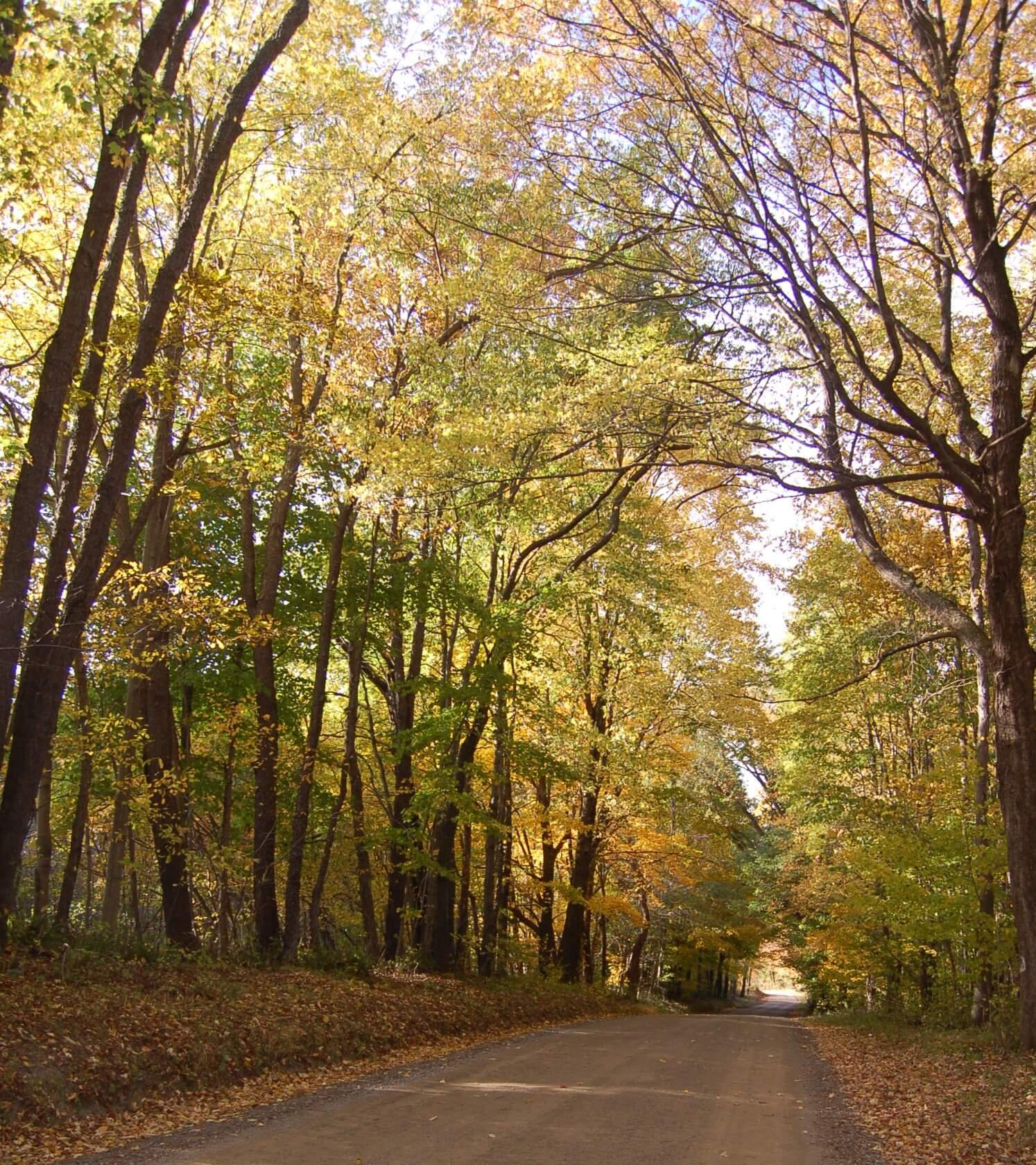 Fall Backroads, Fall Foliage Tours